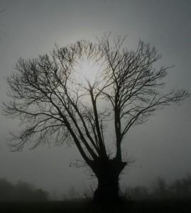 arbre pénombre